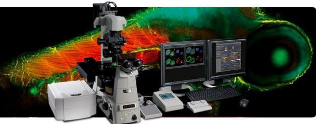 Scanning Confocal Microscope  A1R+